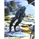 Leaping Frog Bronze Garden Sculpture