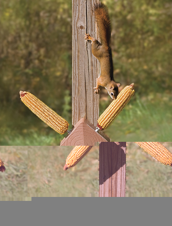 Squirrel Twirl Feeder